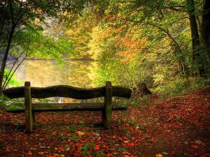 forest-bench